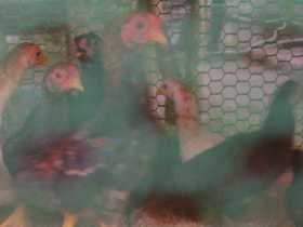 なんかの鳥の雛がいっぱいいた。
